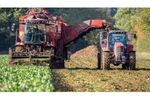 Sugar Beet harvest yields lower after drought and virus yellows